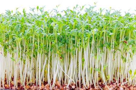 Sprouts of young plants photo