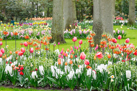 Tulips in the park photo