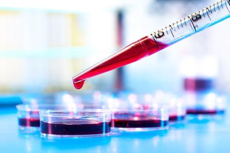 pipeta: pipeta y placa de Petri