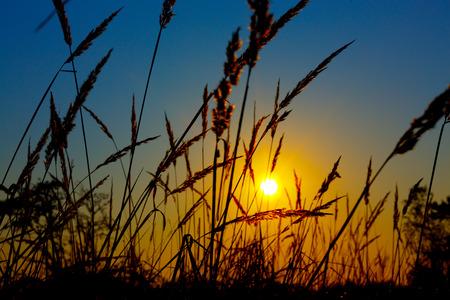 sunrise on the summer wheat field with meadow grass photo