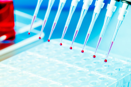 Multichannel Pipette  with biological samples photo