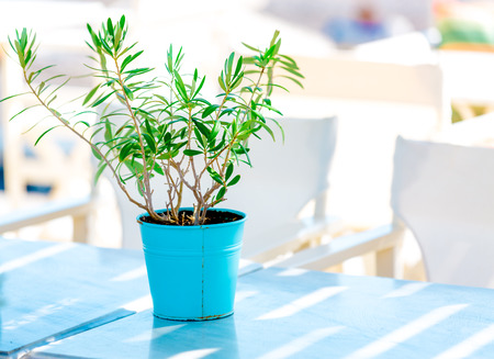 small table: decorative tree in a flowerpot Stock Photo
