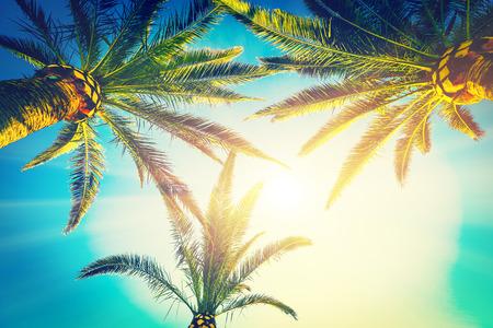three palm trees: three palms