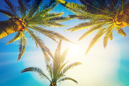 three palm trees: Three palm trees grow to the sky
