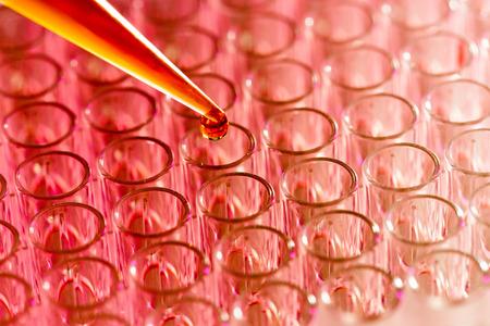 pipeta: Muestras de pipetas de carga en la placa de PCR