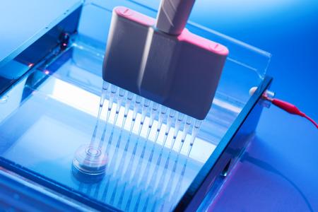 Loading DNA Samples onto an Agarose Gel for Electrophoresis photo
