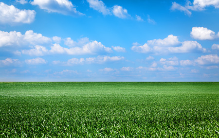 grass field: landscape with green grass field and blue sky Stock Photo