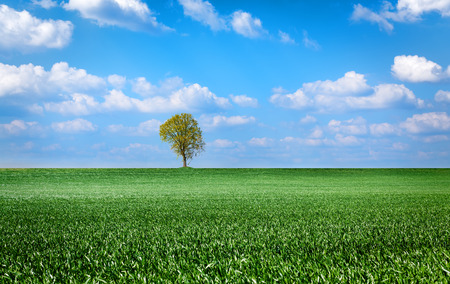 field and sky: landscape with green grass field, sky and tree Foto de archivo