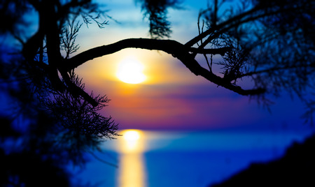 sunset over the sea and silhouette of pine photo