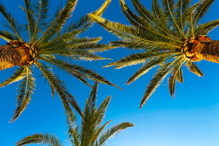 Three branches of palm trees against the sky photo