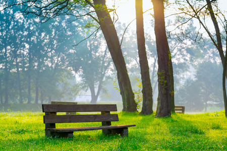 bench in the natural park of the city in the morning photo