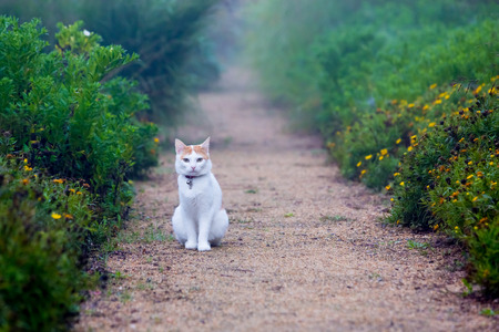 cat sitting on a footpath photo
