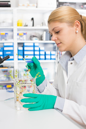 young woman biologist manipulates plants in genetic laboratory photo