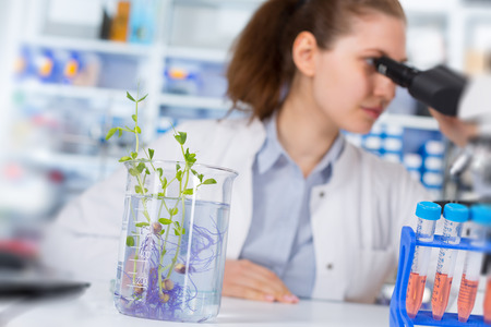 food research: Woman in the laboratory of Plant Genetics Stock Photo