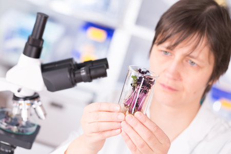 lab tech: woman study of genetic modified GMO plants in the laboratory Stock Photo