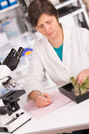 woman study of genetic modified GMO plants in the laboratory Stock Photo