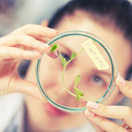 genetically modified: woman study of genetic modified GMO plants in the laboratory Stock Photo