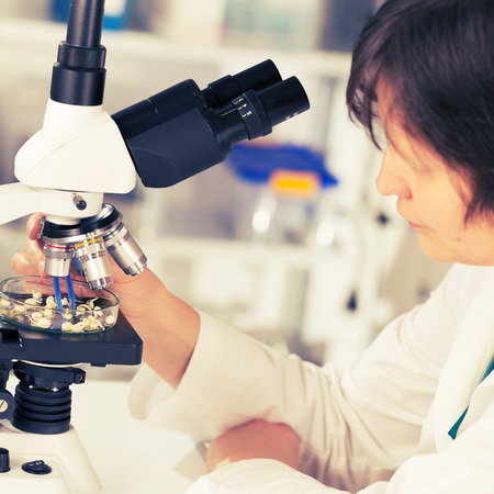 woman study of genetic modified GMO plants in the laboratory photo