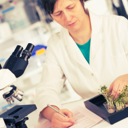 genetically modified crops: woman study of genetic modified GMO plants in the laboratory Stock Photo