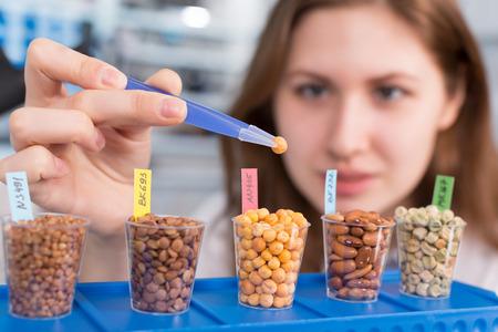 食品の品質の研究室では女の子はマメ科植物穀物をテストします。
