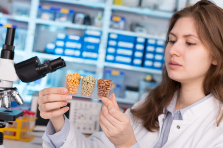 food inspection: girl in the laboratory of food quality tests  legumes grain