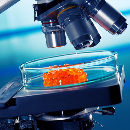 control de calidad: laboratorio de pruebas de calidad de los alimentos caviar