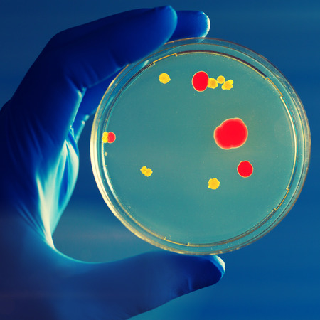 gloved: petri dish in Gloved hand