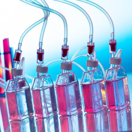 biologia: La creciente cultura biol�gica, botellas el agitador de laboratorio
