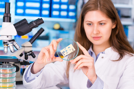 Technician woman In the laboratory tests the food quality photo