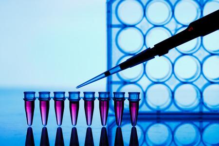 micropipette: PCR strip test tubes and micropipette in genetics laboratory