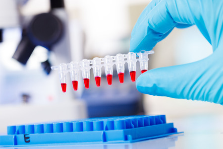 pcr: PCR strip test tubes and micropipette in genetics laboratory