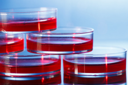 incubator: petri dishes in an incubator
