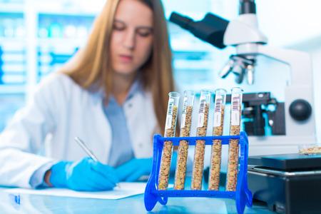 laboratorio: Las diferentes variedades de lentejas en una cría de laboratorio y la ingeniería genética Foto de archivo