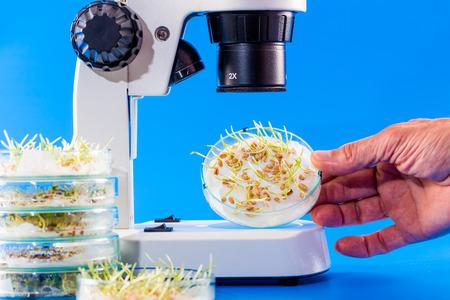 microbiologia: coles de semillas en una placa de Petri bajo el microscopio