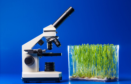 green plants: Research green plants in laboratory