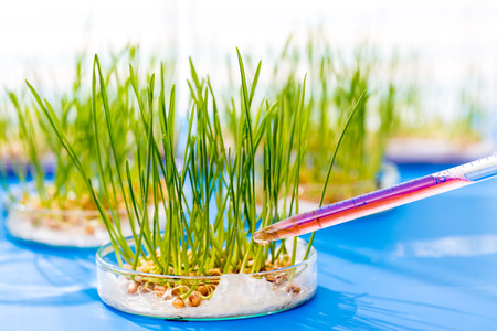 Genetically modified plants in a scientific laboratory Stock Photo