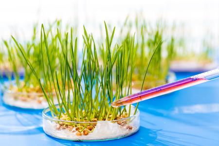 biotecnologia: Las plantas modificadas genéticamente en un laboratorio científico
