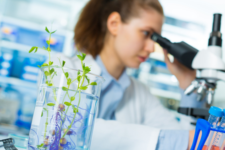 Research green plants in the laboratory 스톡 콘텐츠