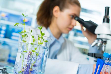 Onderzoek groene planten in het laboratorium Stockfoto
