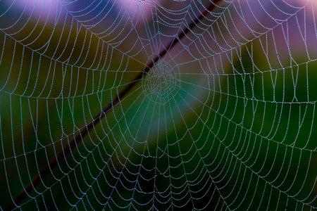 Network cobwebs on the grass Stok Fotoğraf