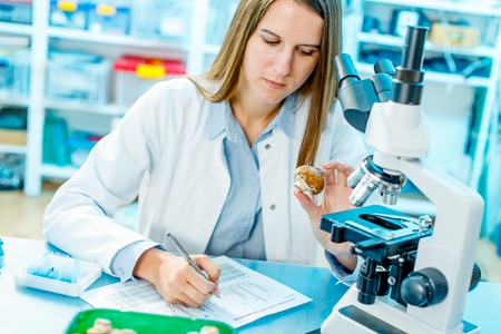 checking food mushrooms on the content herbicides and pesticides Stockfoto