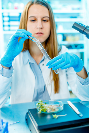 laboratory research: Research green plants in the laboratory Stock Photo