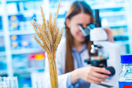 genetic food modification: Food laboratory Stock Photo