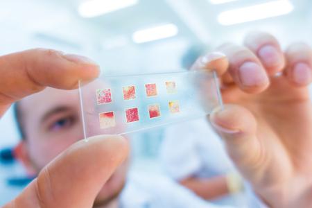 microscopio: primer plano de las manos Científico con el portaobjetos de un microscopio, que examinan muestras