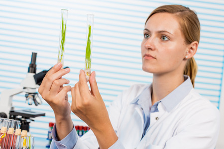 genetically modified crops: Research of GMO plants in microbiological laboratory