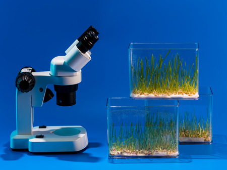 medical test: Green plants and scientific equipment in biology laborotary