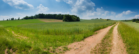gravel: Rural road through fields with green herbs and blue sky with clouds Stock Photo