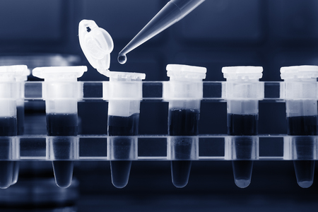micropipette: PCR strip test tubes and micropipette in genetics laboratory. Toned photo Stock Photo