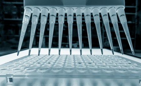 DNA analysis: loading reaction mixture into 96-well plate with multichannel pipette 스톡 콘텐츠