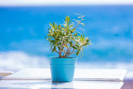 hoja de olivo: olivo en una mesa de café al aire libre Foto de archivo
